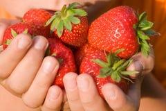 Aardbeien in de handen van een kind Stock Afbeeldingen