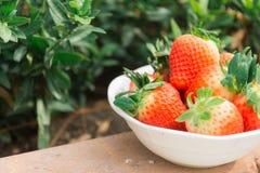 Aardbeien in de tuin Stock Afbeelding
