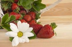 Aardbeien, de zomer, bloem, mand. Royalty-vrije Stock Afbeeldingen
