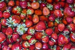 Aardbeien die in watertextuur drijven Stock Afbeelding
