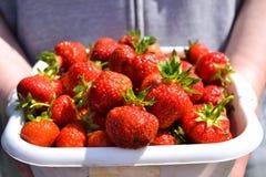 Aardbeien in een doos Stock Foto
