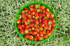 Aardbeien in een kom Stock Foto