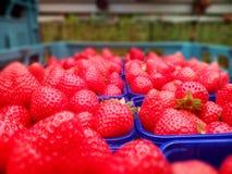 Aardbeien in een krat Royalty-vrije Stock Foto