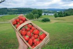 Aardbeien in een mand stock afbeelding