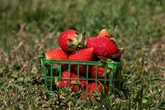 Aardbeien in een mand Royalty-vrije Stock Fotografie