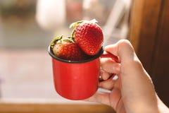 Aardbeien in een rode emailmok en één hand die de mok houden royalty-vrije stock afbeeldingen