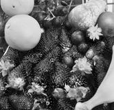 Aardbeien en ander fruit stock afbeelding