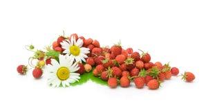 Aardbeien en kamillebloemen op witte achtergrond Royalty-vrije Stock Afbeelding