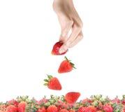 Aardbeien in geïsoleerded handen Royalty-vrije Stock Foto's