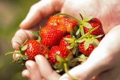 Aardbeien in handen 3 Royalty-vrije Stock Afbeeldingen