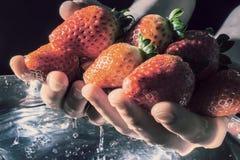 Aardbeien in handen die van het waterclose-up toenemen op een donkere achtergrond in de stralen van de zon Oude retro stijlfoto Royalty-vrije Stock Afbeelding