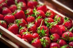 Aardbeien in houten doos Royalty-vrije Stock Afbeeldingen