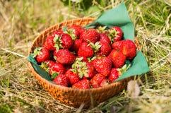 Aardbeien in mand Stock Foto's