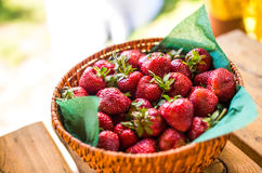 Aardbeien in mand Stock Fotografie