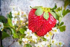 Aardbeien met bloemen Stock Fotografie