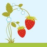 Aardbeien met bloesem stock illustratie