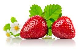 Aardbeien met groene blad en bloemen Royalty-vrije Stock Foto's