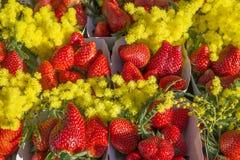 Aardbeien met mimosa Stock Afbeelding