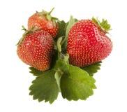 Aardbeien op een witte achtergrond Stock Afbeelding