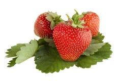 Aardbeien op een witte achtergrond Stock Afbeeldingen