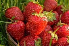 Aardbeien op het gras Stock Foto