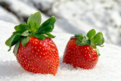 Aardbeien op Ijs in de Winter Royalty-vrije Stock Foto
