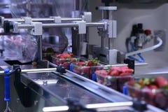Aardbeien op transportband Stock Afbeelding