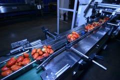 Aardbeien op transportband Stock Foto