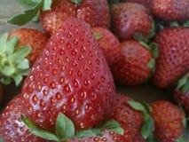 Aardbeien op wit Stock Foto's