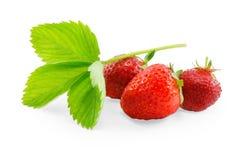Aardbeien op witte achtergrond worden geïsoleerd die Stock Foto's