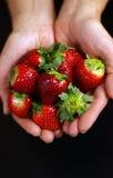 Aardbeien ter beschikking Stock Fotografie