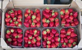 Aardbeien in transparante dozen stock afbeelding