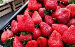Aardbeien van Chili Royalty-vrije Stock Foto