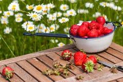 Aardbeien vers van de tuin Stock Fotografie