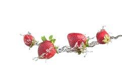 Aardbeien in waterplons, met achtergrond wordt geïsoleerd die Royalty-vrije Stock Foto