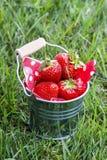 Aardbeien in zilveren emmer die zich op groen weelderig gras bevinden Stock Afbeelding