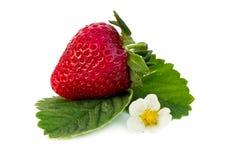 Aardbeifruit Royalty-vrije Stock Afbeeldingen