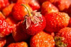 Aardbeifruit in een mand Royalty-vrije Stock Afbeelding