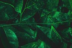 Aardblad met dauw op donkere bosachtergrond Regenwoudmilieu royalty-vrije stock afbeeldingen
