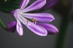 aardbloemen Stock Foto