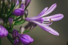 aardbloemen Royalty-vrije Stock Afbeeldingen