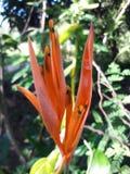 Aardbloemen en bladeren Stock Fotografie