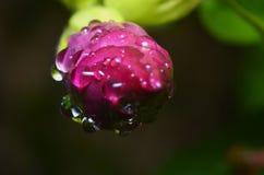 Aardbloemen, water Royalty-vrije Stock Fotografie
