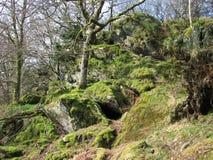 Aardbomen en rotsen dichtbij Dolwyddelan-Kasteel in Wales Stock Fotografie