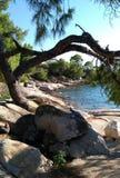 Aardboom bij het strand Royalty-vrije Stock Foto's