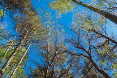 Aardbos, bomen die omhoog aan de zon groeien royalty-vrije stock foto
