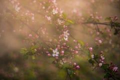Aarddetail in lente, die in mist de bloeien stock foto