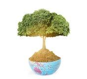 Aarde en boom Stock Foto's