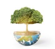Aarde en boom Stock Afbeelding