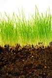 Aarde en gras Royalty-vrije Stock Foto's